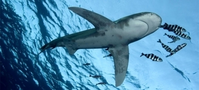 Sharks: The Clock Is Ticking